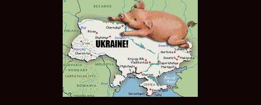 ucraina-maiale