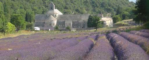 L'abbazia di Senanque, il luogo simbolo della Provenza viola di lavanda. Ma c'è solo un piccolo campo e tutto intorno crescono i boschi