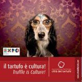tartufo cultura